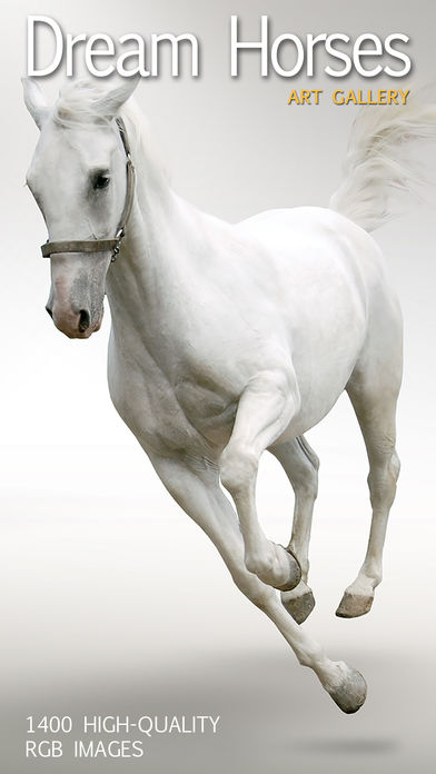 Dream Horses – Art Gallery: Breeds & Types, Racetrack & Tournaments, Photos & Paintings